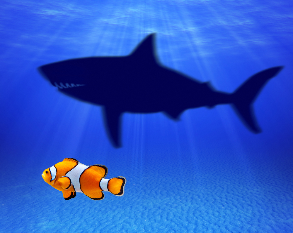 A small fish in the ocean or a big fish in a lake theursan for Big fish in the ocean