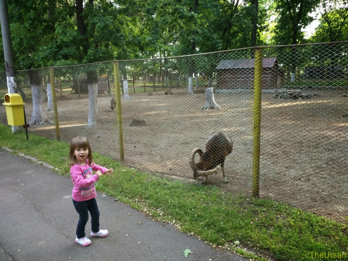 narrative a trip to the zoo Field trips being prepared makes all the difference with so many things and a  trip to the zoo is no exception we offer two lists to make your next trip to the zoo .